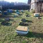 Заносим пчёл в первый омшаник