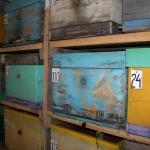 21 октября, пчёлы начинают зимовку