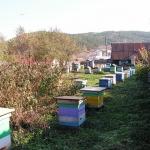 Пчёлы во втором дворе
