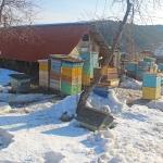 Корпуса с кормовым медом на весну