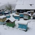 Улья засыпало снегом. 18 мая