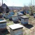 Пасека в с. Красный Завод. Пчеловод Старчевский А.Н. вид 1. 1 мая
