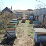 Пасека в с. Красный Завод. Пчеловод Старчевский А.Н. вид 2. 1 мая