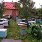 Пчелы около террасы