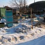 1. Выставили пчел из надземного омшаника.