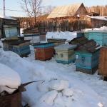 3. Выставили пчел из надземного омшаника.