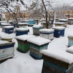 Пчелиные семьи на точке напротив дома