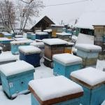 Пчелиные семьи на точке во втором дворе