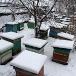 Пчелиные семьи на точке во втором дворе, вид с верху