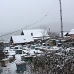 Пчелиные семьи на точке во втором дворе, 2012 год