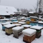 Пчелиные семьи на точке во втором дворе ждут заноса в омшаник