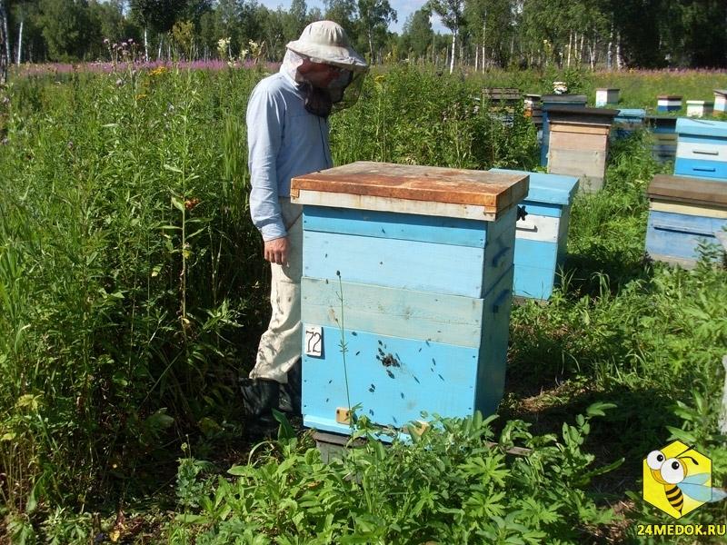 бляшки веках купить улей для пчел цена в псковской области напоминает