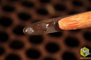 Яйцо матки на кончике специального инструмента, который помогает в разведении маток
