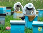 За работой два пчеловода Евгений и Андрей Старчевские