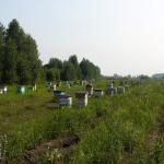 Кочевая пасека Старчевских. Горбатый мост