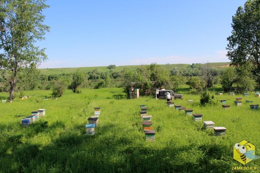 В ночь с 21 на 22 июня вывезли вторую машину пчел