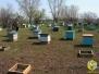 """Май 2011. Урочище """"озеро Исток"""". Вывезли пчел"""