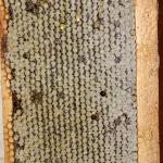 Рамка сотового меда