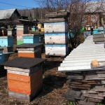 Пчелосемьи ждут поездки на кочевку