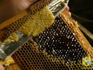 Распечатываем болотный мед