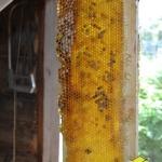 Рамочка мёда