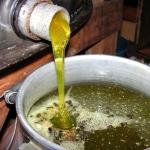 Мёд с осота, василька (сложноцветных) имеет зеленый оттенок