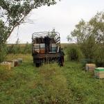 Погрузка пчел идет полным ходом