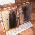 Кормовой мёд в гнездовых рамках