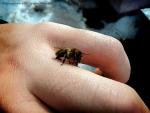 Первый облет пчел после долгой зимы