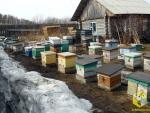 Выставление пчел из омшаников
