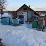 Пчелы в омшанике ждут своей очереди