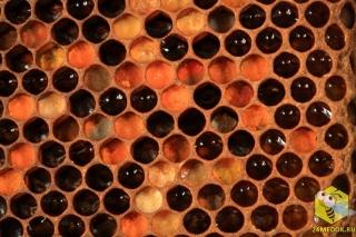 Ячейки с мёдом и пергой