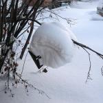 Роепривойник завалило снегом