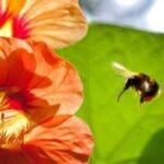 Отрицательно заряженные цветки дают положительный нектар