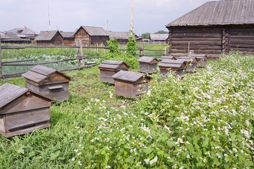 Пчеловодство в Российской Империи в конце ХIХ - начале ХХ веков