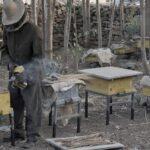 Эфиопских пчеловодов учат итальянцы