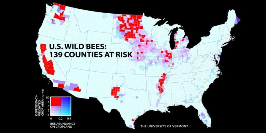 Пчелиная карта США