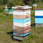 Продажа пчелосемей в Красноярском крае