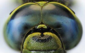 Причина хорошей навигации пчел в пространстве