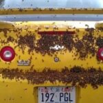 Пчелы напали на автомобиль (фото)