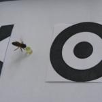 Пчёлы могут усваивать абстрактные понятия