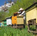 Состояние пчеловодства в Великобритании