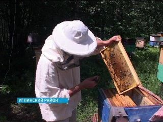 В Башкирии прошел конкурс на лучшего пчеловода-студента