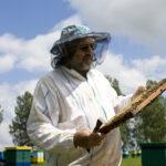 Развитие пчеловодства и Рынок мёда в Новосибирске
