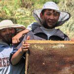 Киргизские пчеловоды