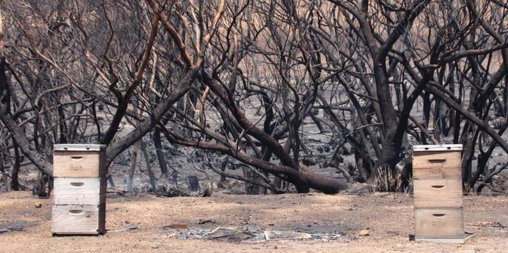 Австралия, пожары, глобальное потепление, потери в пчеловодстве