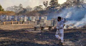Лесные пожары в Австралии. Удар по пчеловодству