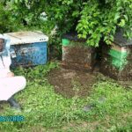 2008 год. На фото Старчевский Е.Н. Этот год запомнился по сильному роению пчелиных семей. Точное количество роёв не запоминали, но общее количество отроившихся пчелосемей приближалось к 70%. Тем не менее, медосбор получился средним. #пасека #история #24honey #24medok #роение #рой #большойрой #roy #apiroy #bee #beefamily #siberia #sibhoney #пчеловодство #beekeeping #beeman