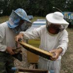 Пчеловоды Матвеевского района