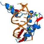 Egr1— белок, фактор транскрипции. Локализуется в клеточном ядре и относится к семейству факторов транскрипции EGR.